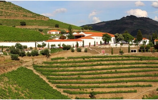 Aproveite para visitar uma Quinta e descobrir como se fazem os famosos Vinhos do Douro