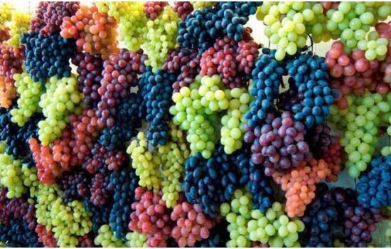 São as diversas castas que se encontram no Douro, que tornam os seus vinhos tão saborosos!