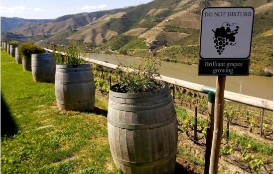 Apesar de ser o mais famoso, no Douro não se produz apenas Vinho do Porto!