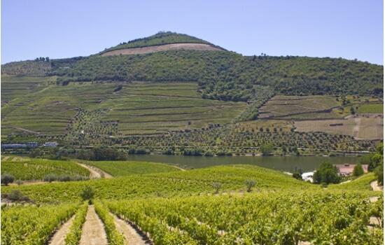 Estas lindíssimas Quintas produzem ainda Vinhos de Mesa de renome, já distinguidos na Wine Spectator!