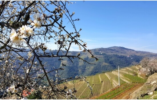 Aproveite as magníficas vistas do Vale para apreciar um cálice de vinho do Porto