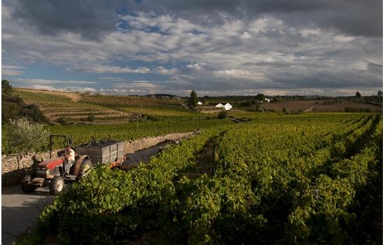 É nesta aldeia que se encontram as vinhas do famoso Moscatel