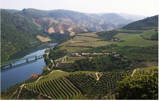 São João da Pesqueira localiza-se na margem esquerda do Rio Douro