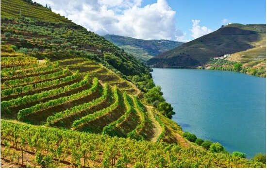 O Douro é a terra do famoso Vinho do Porto