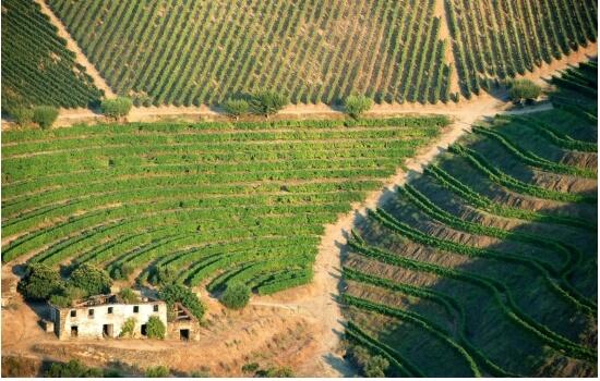 Conhecida pelos seus deliciosos néctares, esta é a região vinícola demarcada mais antiga do mundo!