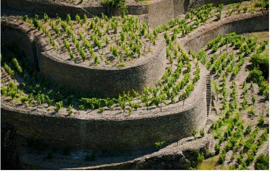 A presença de xisto nos solos das vinhas permite reter grandes quantidades de água