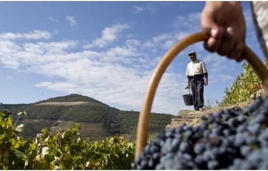 No douro existem cerca de 33.000 produtores de vinho!