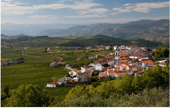 Em Favaios encontram-se algumas das Quintas produtoras do tão famoso Vinho Moscatel do Douro