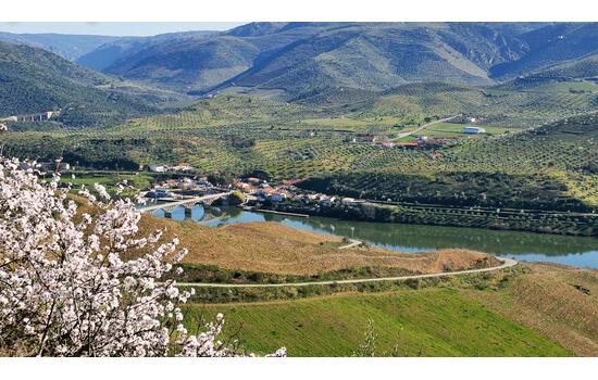 Esta região do Douro é maioritariamente conhecida pelas suas amendoeiras