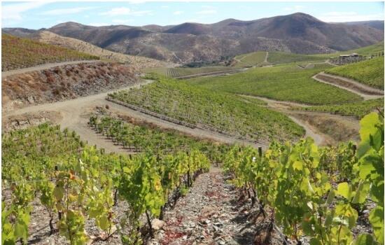 Nas vinhas da Ramos Pinto produzem-se alguns dos mais conhecidos Vinhos do Porto