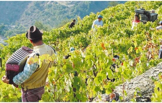 Na Quinta do Noval são produzidos alguns dos melhores vinhos do Porto
