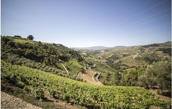 As vinhas do Douro produzem os melhores Vinhos do Porto