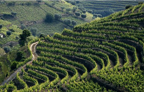A sua vasta dimensão cobre grande parte da região do Douro