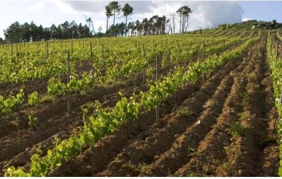 Deixei-se levar pelas incríveis vinhas desta região demarcada do alto douro