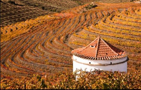 O Outono é uma das melhores alturas para visitar o Douro