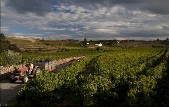 Foi em Favaios que nasceu o delicioso Vinho Moscatel do Douro