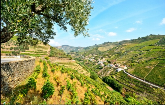 Apesar de rigorosos, os Invernos no Douro são perfeitos para uma escapadinha reconfortante