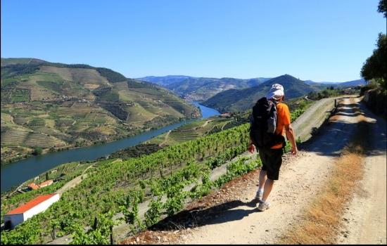 São vários os turistas que procuram o Douro pelo seu vinho