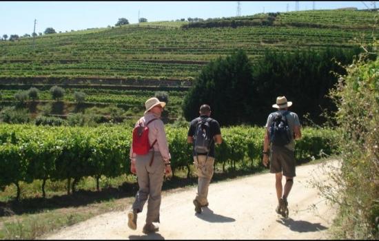 Existem vários trilhos diferentes para explorar as vinhas mais famosas de Portugal