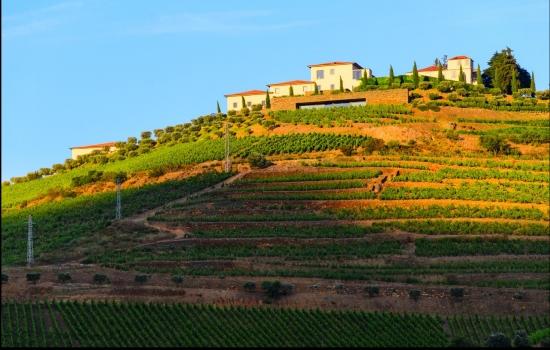 São muitas, as Quintas que oferecem visitas guiadas aos seus vinhedos
