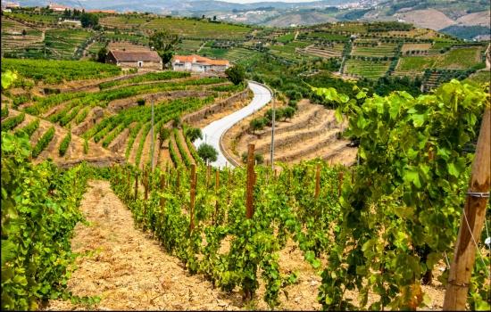 E nessas visitas é possível ficar a conhecer ainda mais sobre o Vinho do Douro