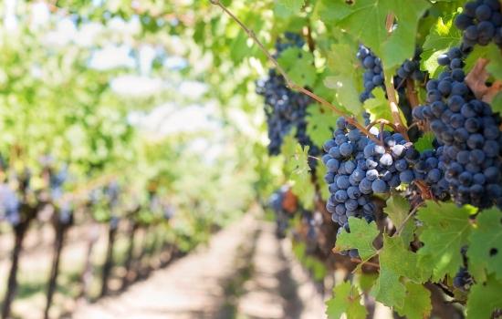 O Vale do Douro é uma das mais antigas regiões vinícolas demarcadas da Europa