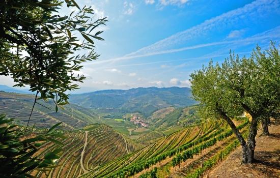 A vila está rodeada de vinhedos
