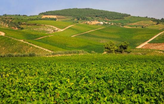 As vinhas responsáveis pelo sabor único do vinho Moscatel