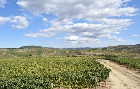 A bela aldeia de Favaios, conhecida pelo seu vinho moscatel