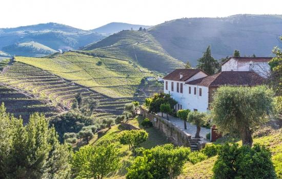 A História do vinho mistura-se com a História do Douro e a cultura da região