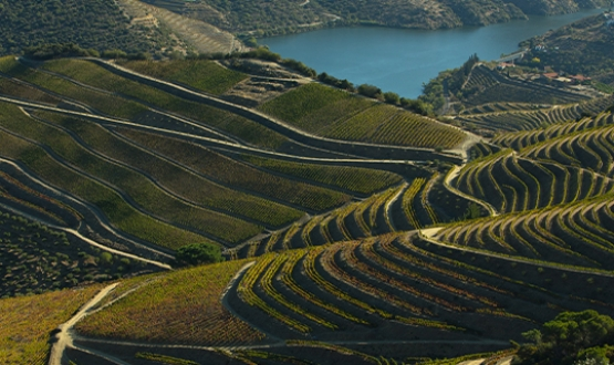 Experiences Through Douro