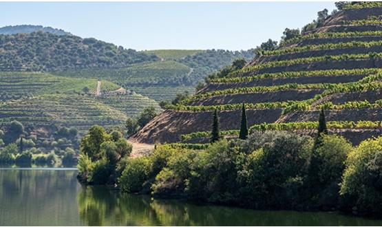 Segredos do Douro e Tâmega <br>3 Dias</br>