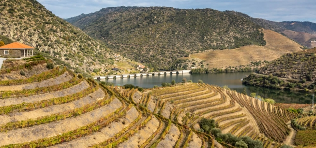 Tour Duero y sus Viñedos