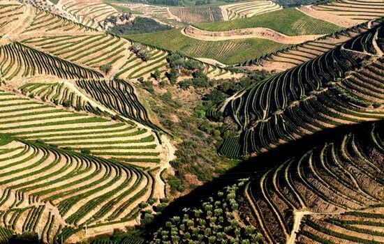 Os socalcos do Douro são a prova da harmonia perfeita entre Homem e Natureza