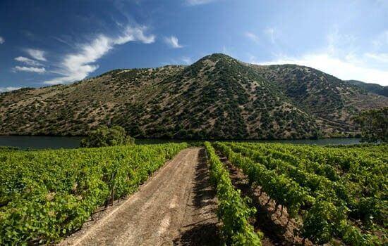 As Vinhas plantadas ao longo de décadas moldaram o Douro e tornam-no único