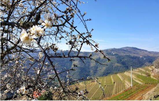 Apesar da visita à Quinta não ser permitida, Alijó oferece lindas paisagens com os seus antigos miradouros